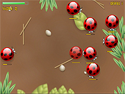 Click to Play Spider Bugs